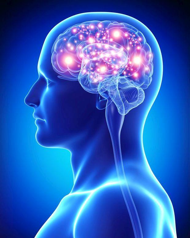 מוח פעיל